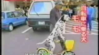 "Dog Skateboarding, Dalmation, And More!!!- ""sold"" By Valley Lodge- Greatest Video Ever"