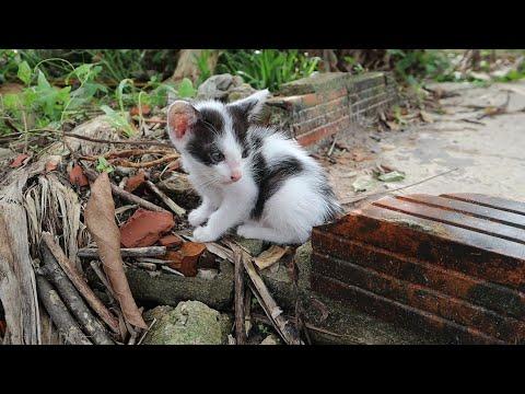 Cute tiny kitten looking other kitten eating | cute kitten meowing walking play