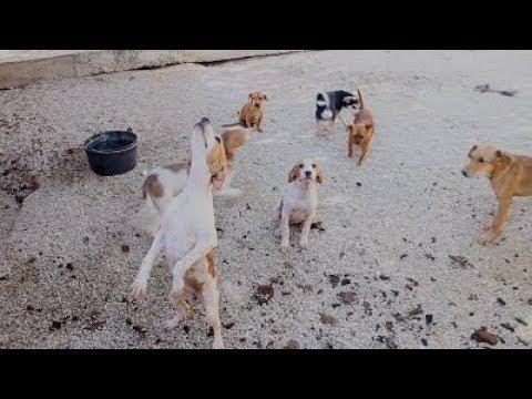 Centro de Acogida Canina de Lucena