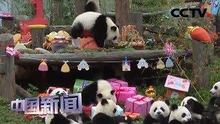 [中国新闻] 18只2018年出生大熊猫宝宝集体庆生   CCTV中文国际