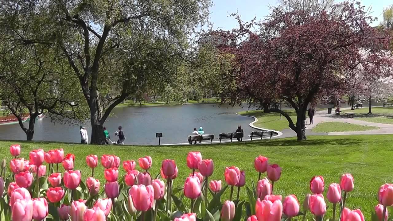 Keukenhof Gardens World Beautiful Flowers Tulip Garden 1080hd Youtube