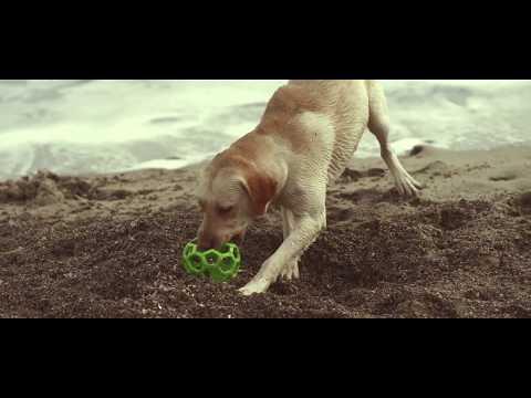 Labrador Chester dog tricks