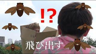 ハイサイ探偵団→https://www.youtube.com/user/hittyaso 二代目のチャン...