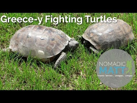 Greece-y fighting turtles