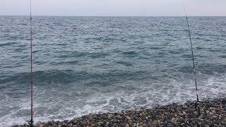Как поймать ласкиря на черном море. Ловим морского карася. Рыбалка на морского карася.