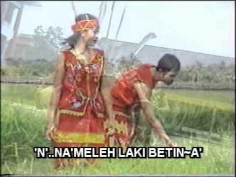 Lagu Dayak - Ta' Uma