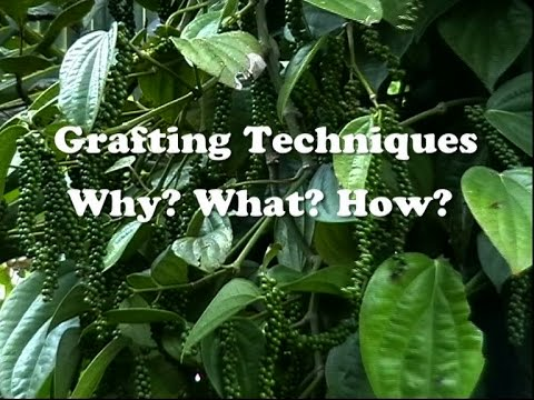 Grafting Techniques Why What How Youtube