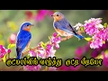 Good morning wishes in tamil whatsapp sms video 067 mp3