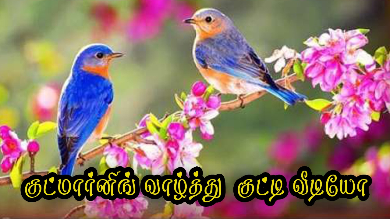 Good Morning Wishes In Tamil Whatsapp SMS Video #067   YouTube