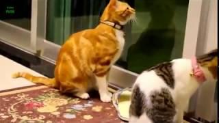 Komik hayvan videoları & Funny animals video