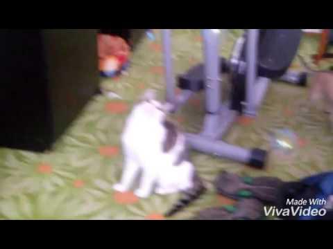 Perfektní kočička videa