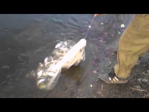 Ловля рыбы кастинговой сетью. Техника заброса сети парашют.