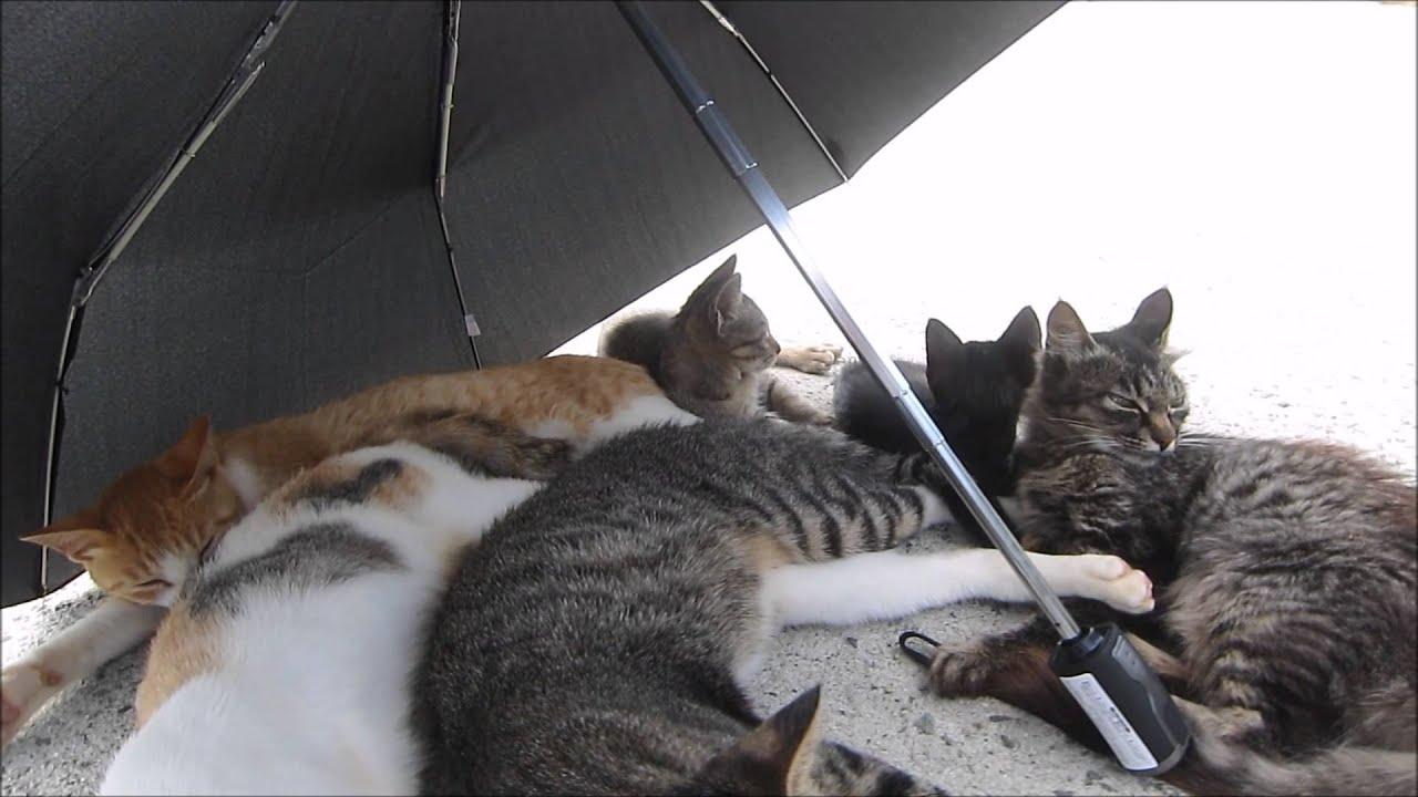 La morìa dei gatti dell'isola giapponese di Aoshima