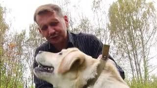 Собаки и кошки в поисках дома