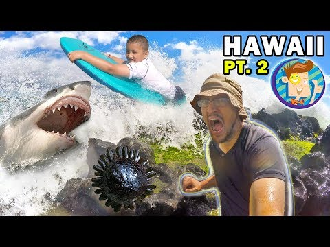mike-gets-stuck-in-hawaii!-shark-fears-&-weird-sea-creature-(funnel-vision-maui-trip-part-2)
