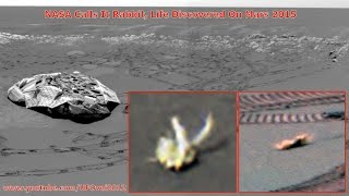 NASA Calls It Rabbit, Life Discovered On Mars 2015