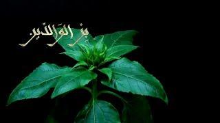ماذا قال القرآن عن | بر الوالدين