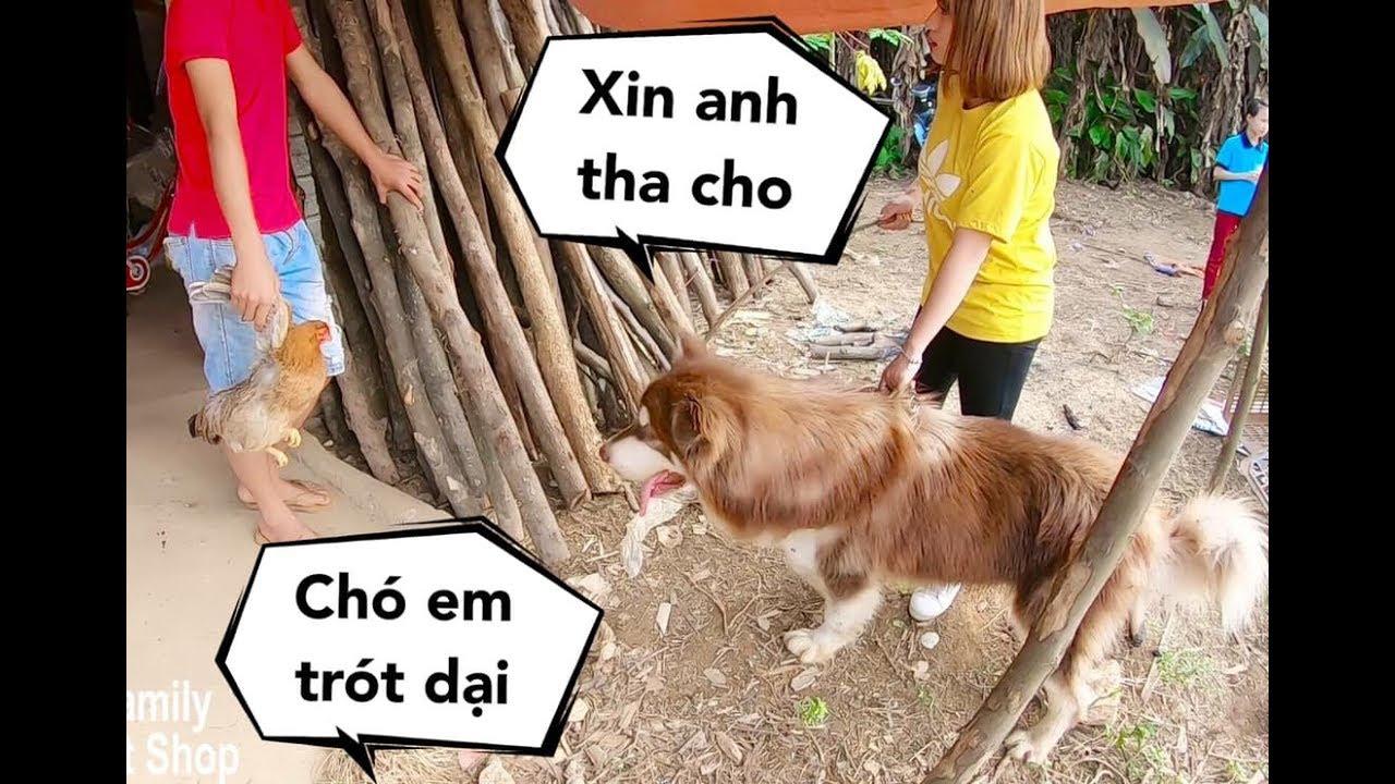 Chó Mật đi ăn trộm gà bị chủ nhà bắt được, Mẹ phải đến chuộc về – Mật Pet Family
