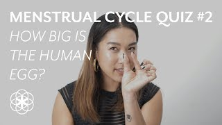 How big is the human egg? Clue's Menstrual Cycle Quiz
