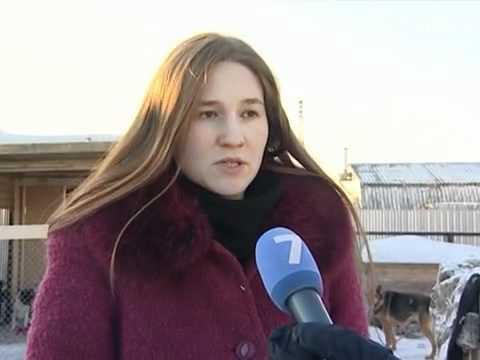 Бездомные собаки замерзают в Вологде
