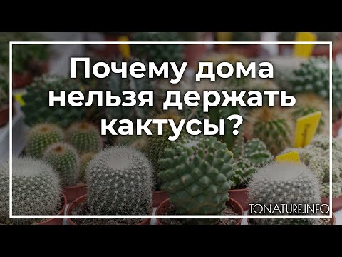 Почему дома нельзя держать кактусы? | toNature.Info