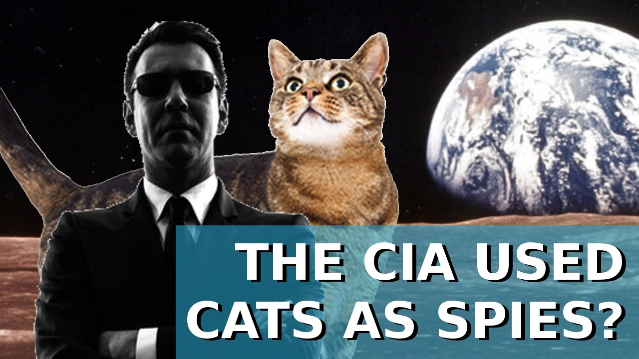Image result for SPY KITTIES SECRET OF CIA