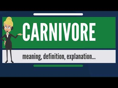 What is CARNIVORE? What does CARNIVORE mean? CARNIVORE meaning, definition & explanation