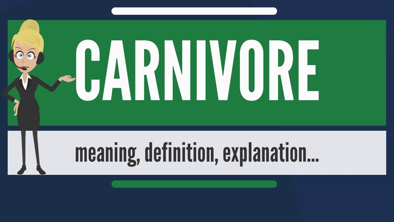 what does a carnivore mean