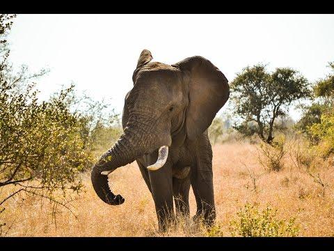 South Africa 2014  Moholoholo Wildlife Rehabilitation Centre