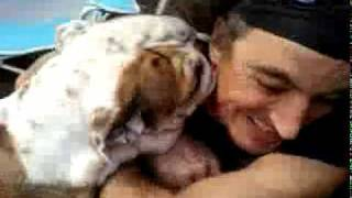 Bulldog Licking A Face
