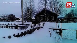 Старый зубр забрел в село Бережное (Усть-Кубинский район)