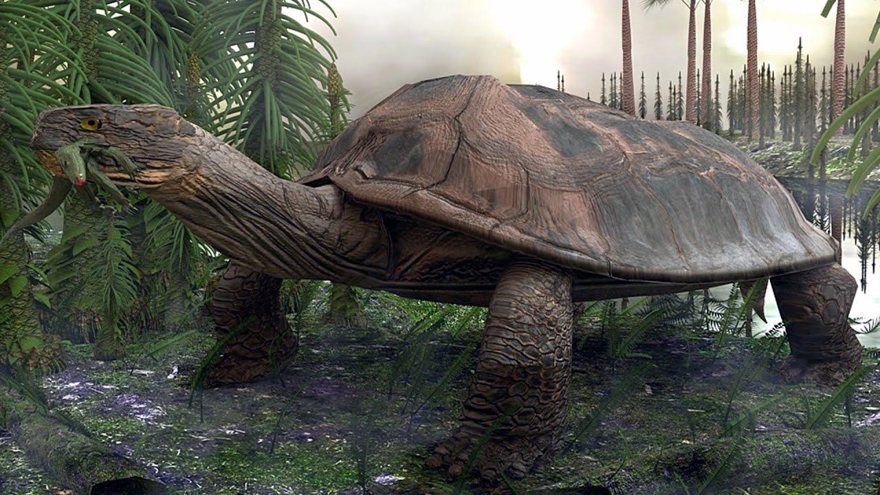 كائنات حية  نجت من عصور الديناصورات !!