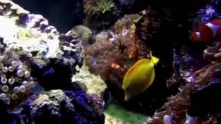 самый большой аквариум aka21(, 2016-05-28T11:15:30.000Z)