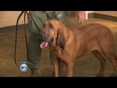 Honolulu police get new dog to help sniff out missing people
