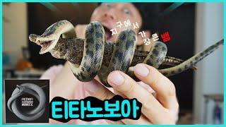 지구에서 가장 큰 뱀이라는 티타노보아 잡았음ㅋㅋ 리보 공룡피규어 꿀잼   히히튜브