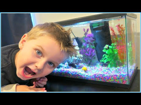 We Got Our FIRST FISH TANK For The KIDS! 5 GALLON AQUARIUM TOUR!