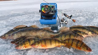 Ice Fishing for Perch and Walleyes! (MINNESOTA)