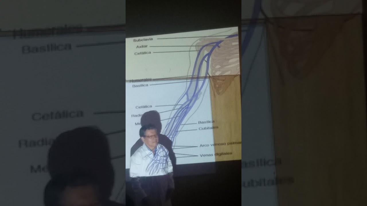 anatomía venas del brazo - YouTube