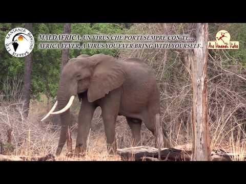ZAMBIA - KANTANTA HUNTING SAFARIS - AFRICA FEVER II