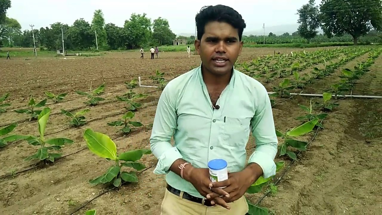 Sumitomo chemical products of Nature deep in Banana crop Result  Sumitomo  chemical