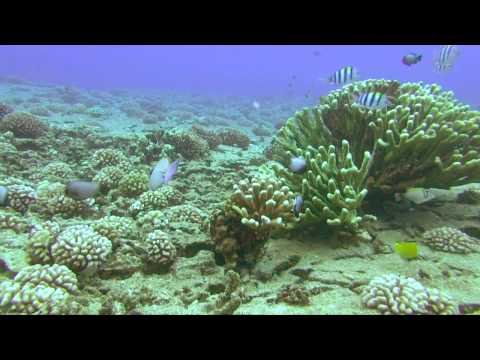 Niihau Dive Sites - Pyramid Point