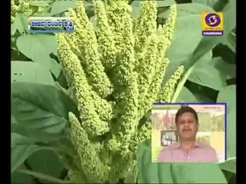 BC-30/8/17.1)Rice bean cultivation.2)Integrated farming.