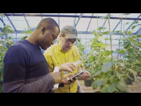 Michigan State University -Dr. David Kramer--Plant Research
