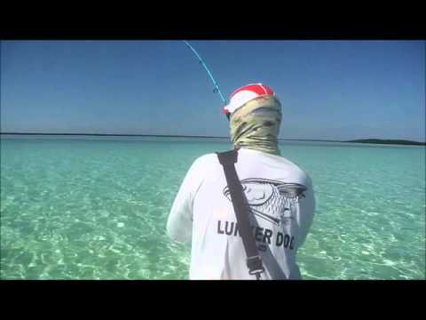 Fishing in Cuba For  Cowfish On The Salt Flats Cayo Romano  Jan 2016