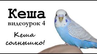 "🎤 Учим попугая по имени Кеша говорить. Видеоурок 4: ""Кеша солнышко"""