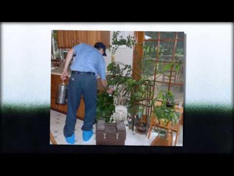 Exterminator | Tempe, AZ -- Cummings Termite & Pest Control
