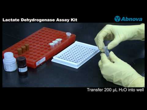 Lactate Dehydrogenase Assay Kit