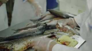 Обучение технологии переработки рыбы 2