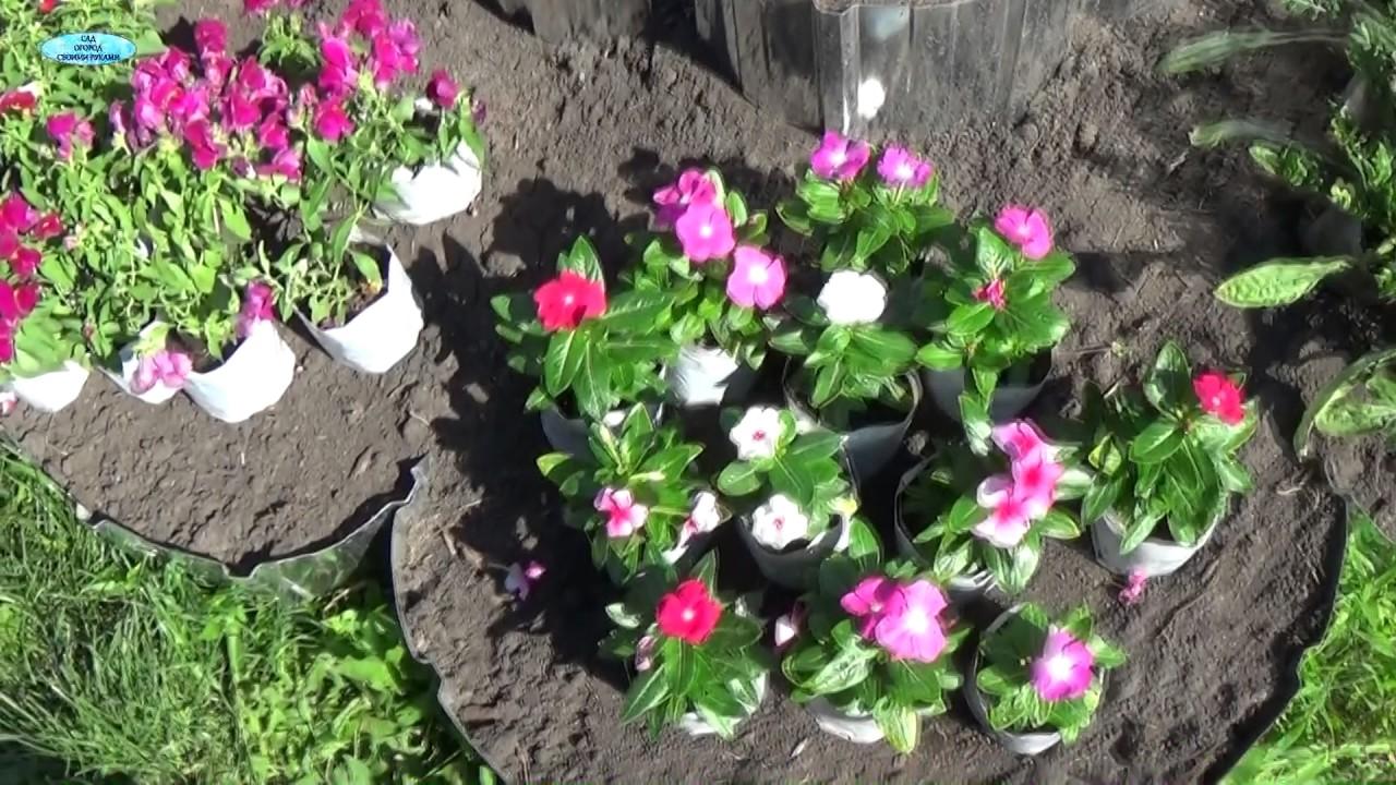 Наша дача цветы для клумбы