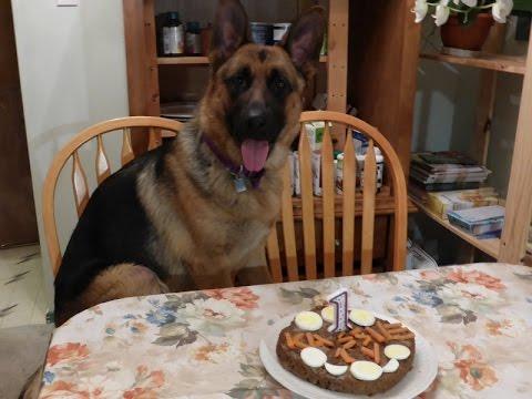 GERMAN SHEPHERD 1 YEAR BIRTHDAY